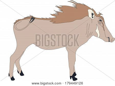 Portrait of a standing warthog, hand drawn vector illustration isolated on white background