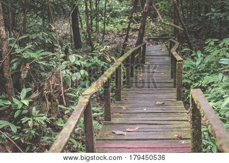 Moss Covered Footpath In The Dense Rainforest Of Kubah National Park, West Sarawak, Borneo, Malaysia