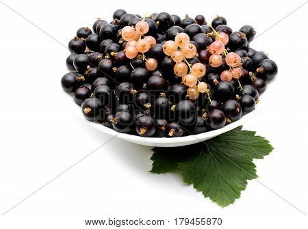 Branches of black currant on a white background. Fresh black currant