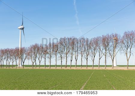 Dutch field in early spring with a row of trees and a windturbine