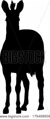 Silhouette of a hartmann's mountain zebra looking to viewer, hand drawn vector illustration isolated on white background