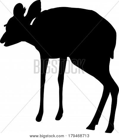 Silhouette of a damara dik dik, hand drawn vector illustration isolated on white background