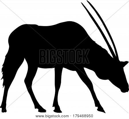 Silhouette of a standing oryx gazelle, hand drawn vector illustration isolated on white background