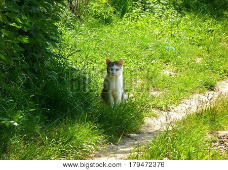 Photo of a cat with hurt eye sitting in the grass