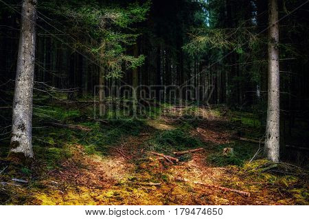 Path into a dark forest in Baden-Wuerttemberg Germany.