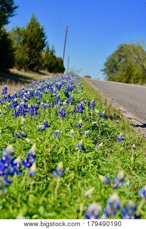 Bluebonnet Texas Country Road in the Spring
