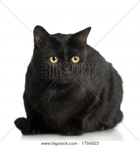 Black Cat ( 1 Years )