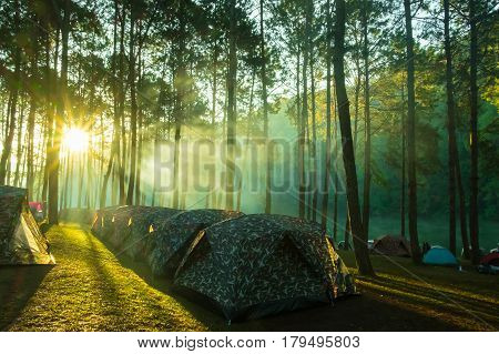 Camping and tent under the pine forest in sunrise at Pang-ung pine forest park Mae Hong Son North of Thailand Travel