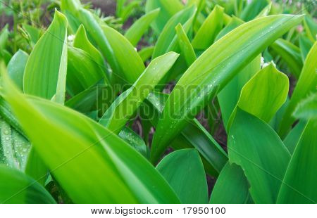 Beautiful Spring Green Background