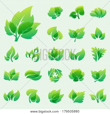 Green leaf eco design element icon friendly nature elegance symbol and decoration floranatural element ecology organic vector illustration. Abstract bio foliage decorative flora.