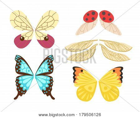 Wings isolated animal feather pinion bugs freedom flight and natural hawk life peace design flying element eagle winged side shape vector illustration. Beauty haven soft anatomy graphic.