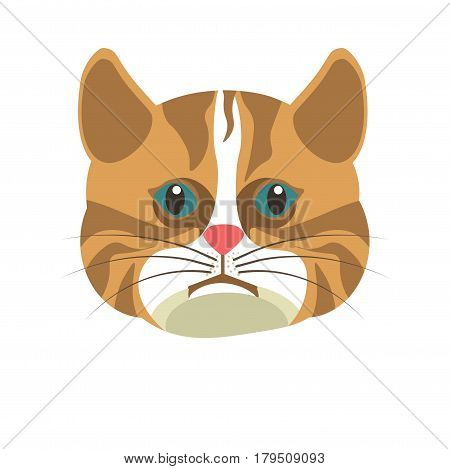 Portrait of a brown american shorthair cat isolated on white. Vector illustration in flat design of fluffy domestic animal with expressive face, full cheeks, broad ears, green eyes and light spot.