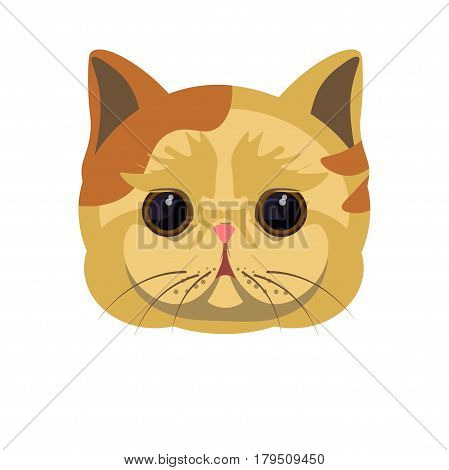 Exotic shorthair kitten in beige color with some red spots, big round black eyes and overhanging stretchy cheeks isolated on white. Vector colorful illustration in flat design of cat portrait