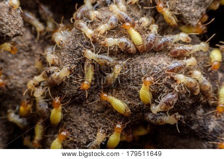 Hordes of termites building their nest in the forest