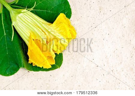 Pumpkin Flower On Wrapping Paper
