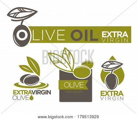 Olive oil extra virgin flat logotype on white. Vector illustration of company labels green and dark olivic berries with leaves near inscriptions. Healthy condiment template with collection of tags