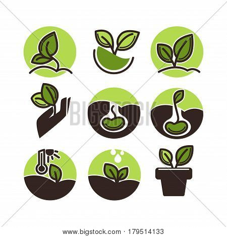 Green plant growing from seed set of round buttons isolated on white background. New life concept, origin of new life logo. Vector illustration of leaf above earth, birth of floral element in circle
