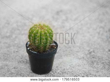 single green cactus palnt for gardening in plastic pot on cement floor background