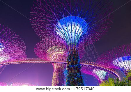 Supertree Grove At Gardens By The Bay At Night. Singapore