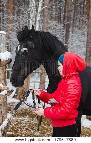 Side view of a woman putting a bridle to the crow horse in winter forest.