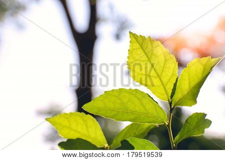silhouette isolated green leaves and light through textured in tropical rainforest feel freshness with sun flare