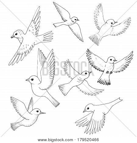 vector set of flying birds, hand drawn songbirds, isolated vector elements