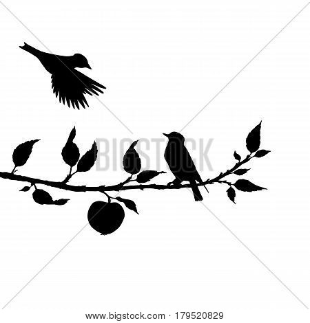 vector silhouettes of birds at apple tree, hand drawn songbirds at branch, isolated vector element