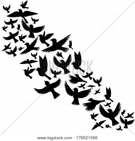 Bird flock, vector flying birds silhouettes, hand drawn songbirds