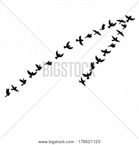 Bird flock, vector flying birds silhouettes, hand drawn songbirds