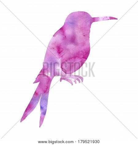watercolor purple hummingbird silhouette, hand drawn songbird, isolated painting element