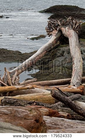 Assorted pieces of driftwood on the ocean shore