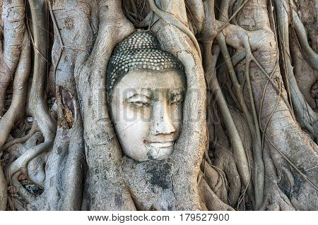 Buddha head trapped in roots of giant tree. Famous Ayutthaya landmark and UNESCO World Heritage Site. Thailand
