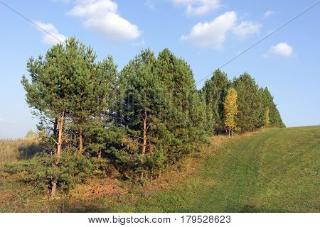 Beautiful autumn landscape with pines on the hill