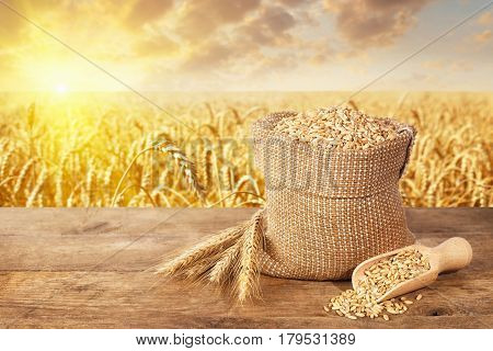 ears of wheat and grains in sack on table with ripe cereal field on the background. Agriculture and harvest concept. Golden wheat field on sunset. Harvest with copy space area for a text