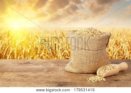 wheat grains in sack on table with ripe cereal field on the background. Agriculture and harvest concept. Golden wheat field on sunset