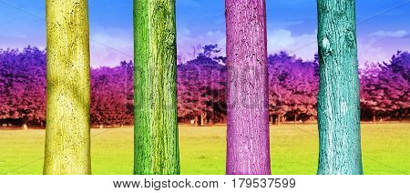 Colorfull Tree Trunks Close Up In The Park. Abstract Psychedelic Colors