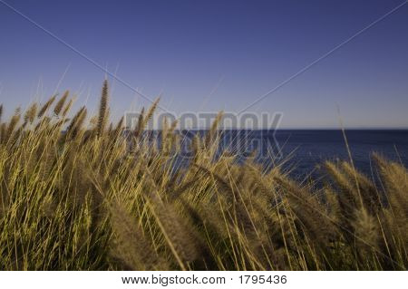 Cattails Blowing In The Wind
