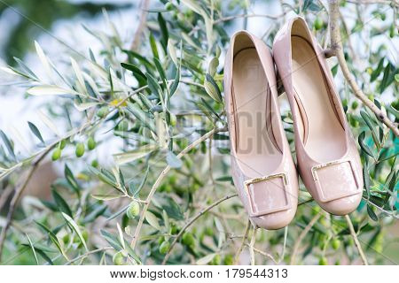 Wedding bride shoes on olive tree branch
