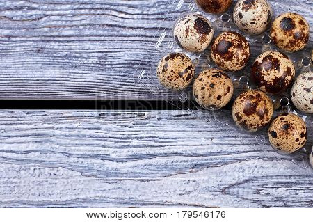 Plastic tray with quail eggs. Small eggs, gray wood background. Food for fitness.