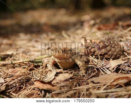 sitting brown toad on a trees background