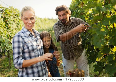 Wine grower family together in vineyard before harvesting