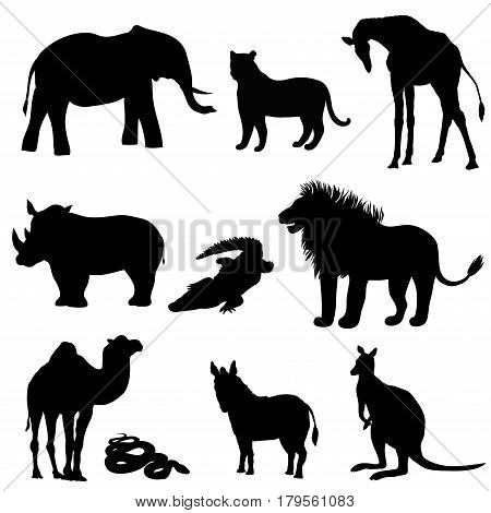 Vector illustration the image of animals animals. Black silhouette. Elephant kangaroo camel lion zebra rhinoceros giraffe snake crocodile and tiger
