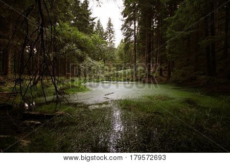 Loch in the forest, Perthshire, Scottish Highlands