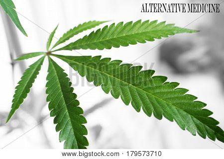 Marijuana Leaf With Alternative Medicine High Quality