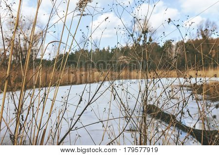 Through The Dry Yellow Grass, A Snow-covered Lake, A Forest And A Cloudy Clear Sky, In Retro Style