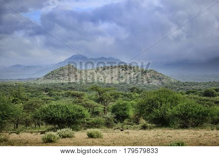 Tsavo National Park in cloudy weather. Kenya