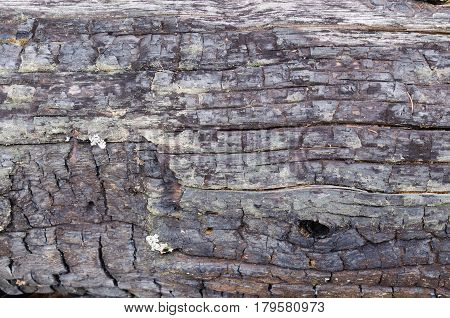 Texture of old charred tree dilapidated surface