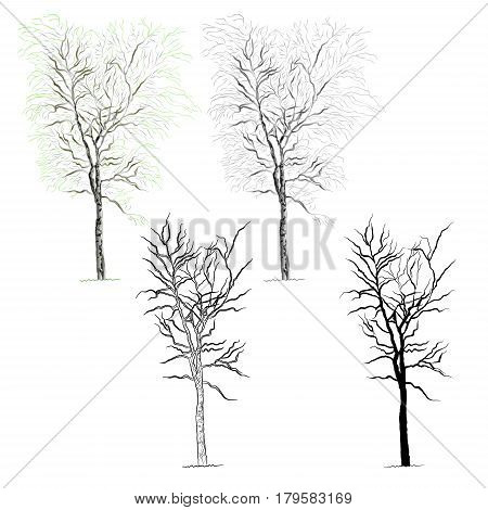 Tree birch color black and white contour of the silhouette vector