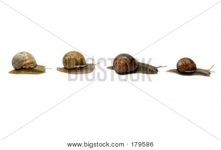 Snails In A Row