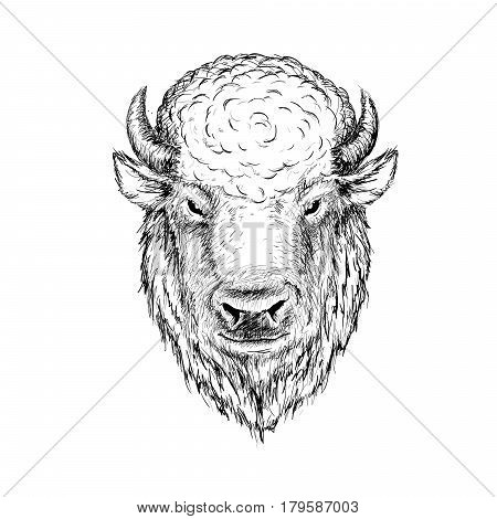 head of buffalo.Face of bison, bull.Graphic sketch hand drawn vector illustration.Ink drawing